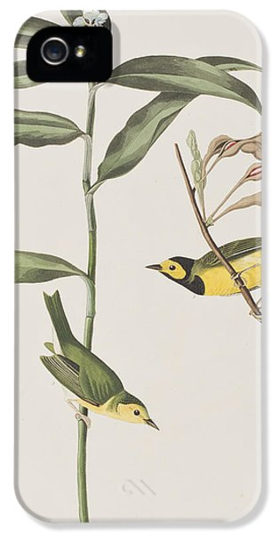 Hooded Warbler  IPhone 5 Case by John James Audubon