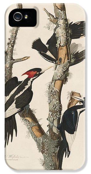 Ivory-billed Woodpecker IPhone 5 Case