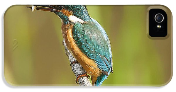 Kingfisher IPhone 5 Case