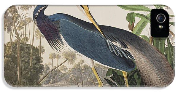 Louisiana Heron  IPhone 5 Case by John James Audubon