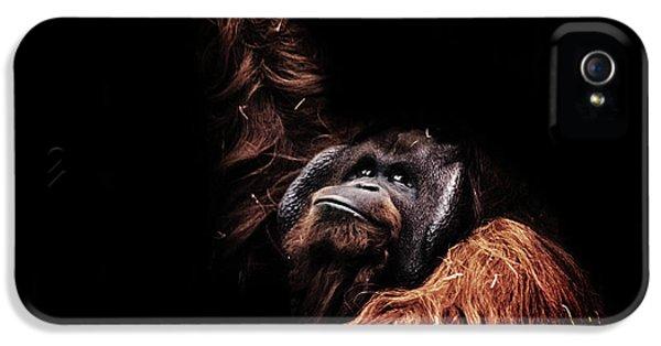 Orangutan IPhone 5 / 5s Case by Martin Newman