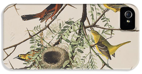 Orchard Oriole IPhone 5 Case