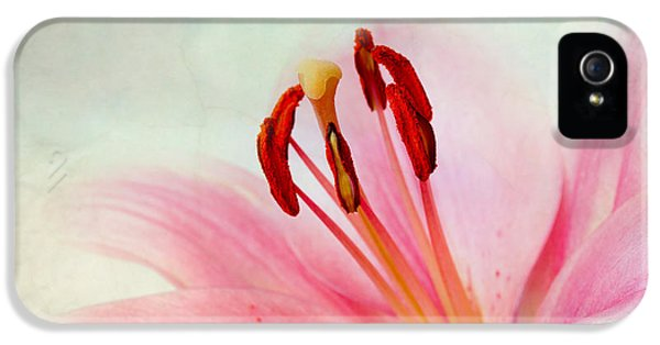 Lily iPhone 5 Case - Pink Lily by Nailia Schwarz