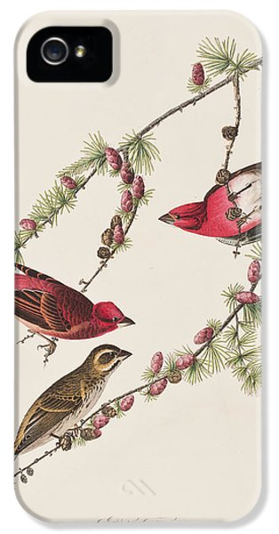 Purple Finch IPhone 5 / 5s Case by John James Audubon