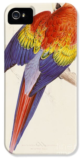 Red And Yellow Macaw IPhone 5 Case by Edward Lear