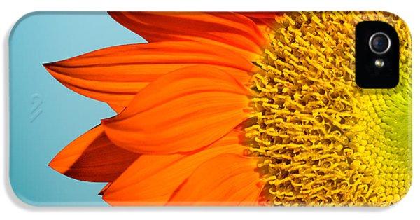 Sunflowers IPhone 5 Case by Mark Ashkenazi