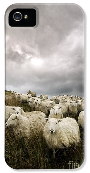 Sheep iPhone 5 Case - Welsh Lamb by Angel Ciesniarska