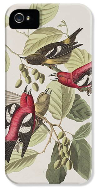 White-winged Crossbill IPhone 5 Case by John James Audubon