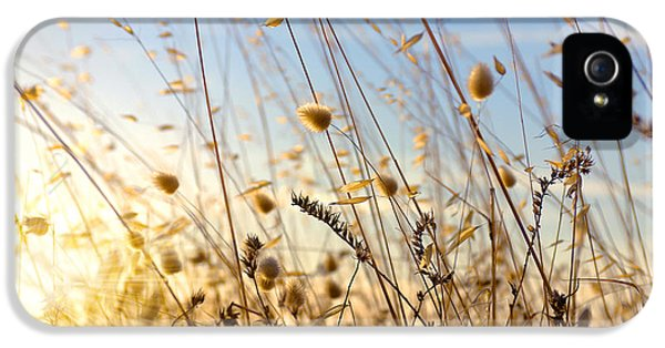 Agriculture iPhone 5 Cases - Wild Spikes iPhone 5 Case by Carlos Caetano