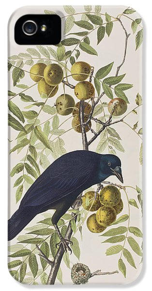 American Crow IPhone 5 Case by John James Audubon