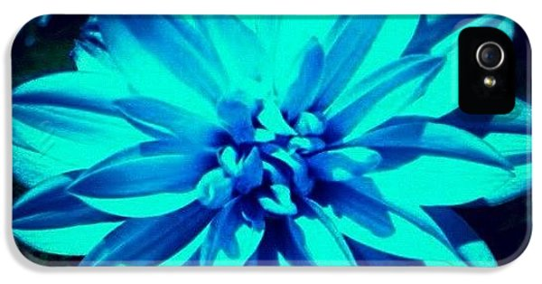 Flower IPhone 5 Case by Katie Williams