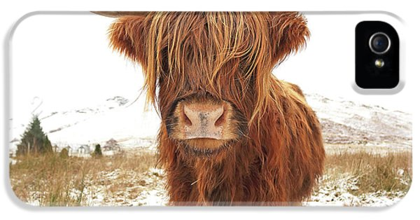 Cow iPhone 5 Case - Highland Cow by Grant Glendinning