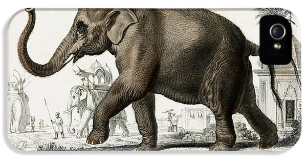 Indian Elephant, Endangered Species IPhone 5 Case by Biodiversity Heritage Library