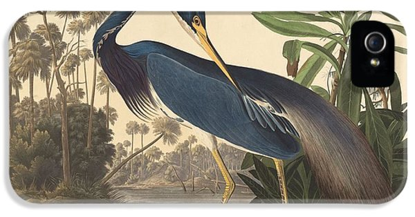 Ibis iPhone 5 Case - Louisiana Heron by Dreyer Wildlife Print Collections