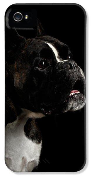 Dog iPhone 5 Case - Purebred Boxer Dog Isolated On Black Background by Sergey Taran