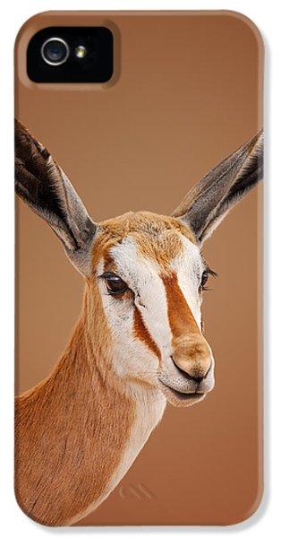Springbok Portrait IPhone 5 Case by Johan Swanepoel