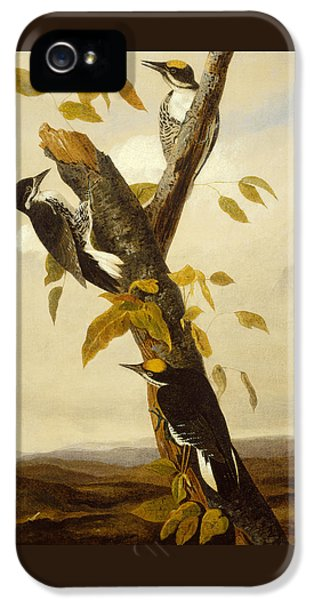 Woodpeckers IPhone 5 / 5s Case by John James Audubon