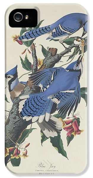 Blue Jay IPhone 5 Case by Rob Dreyer