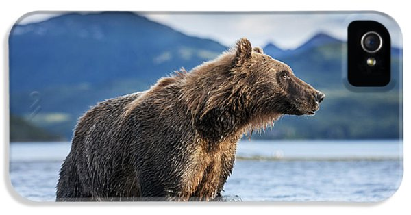 Coastal Brown Bear  Ursus Arctos IPhone 5 Case by Paul Souders