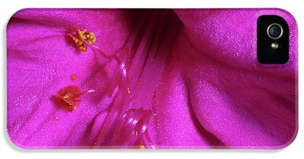 4 O'clock Bloom IPhone 5 Case by Richard Rizzo