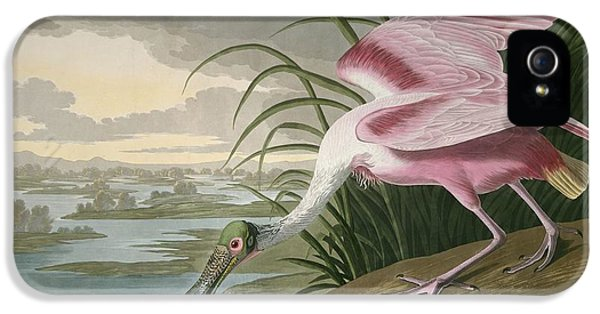 Roseate Spoonbill IPhone 5 Case by Dreyer Wildlife Print Collections