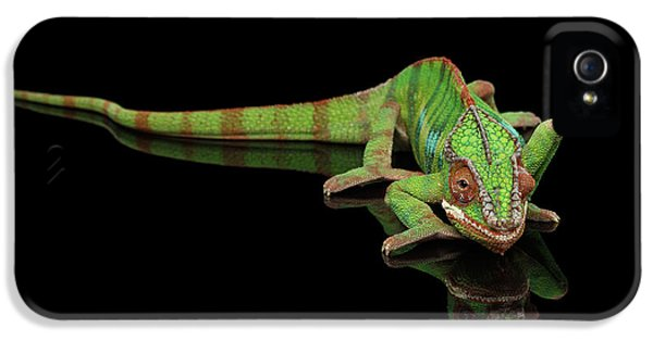 Sneaking Panther Chameleon, Reptile With Colorful Body On Black Mirror, Isolated Background IPhone 5 Case