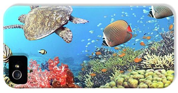 Underwater Panorama IPhone 5 Case by MotHaiBaPhoto Prints