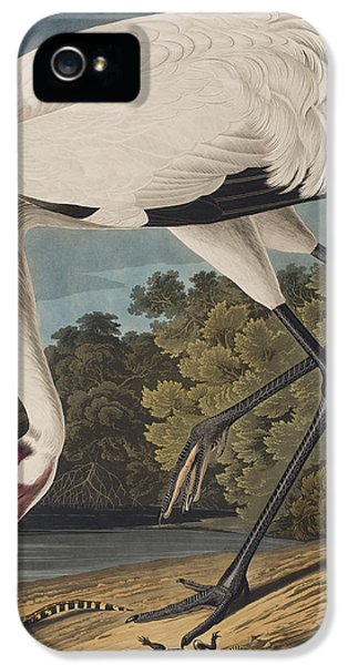 Whooping Crane IPhone 5 Case by John James Audubon
