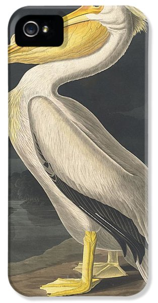 American White Pelican IPhone 5 Case