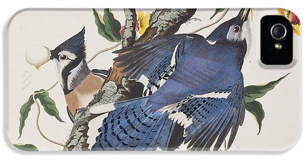 Bluejay iPhone 5 Case - Blue Jay by John James Audubon