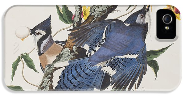 Blue Jay IPhone 5 / 5s Case by John James Audubon