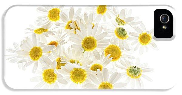 Chamomile Flowers IPhone 5 Case