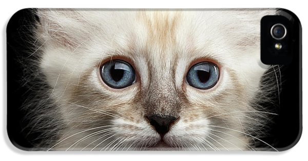 Cat iPhone 5 Case - Cute American Curl Kitten With Twisted Ears Isolated Black Background by Sergey Taran