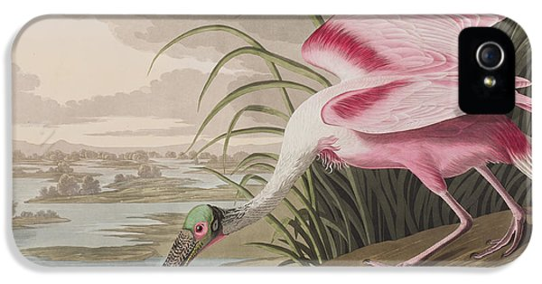 Roseate Spoonbill IPhone 5 Case by John James Audubon