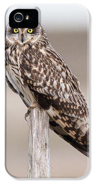 Short Eared Owl IPhone 5 Case