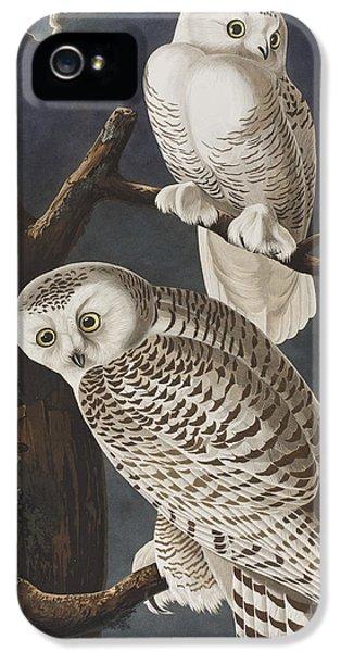 Snowy Owl IPhone 5 / 5s Case by John James Audubon
