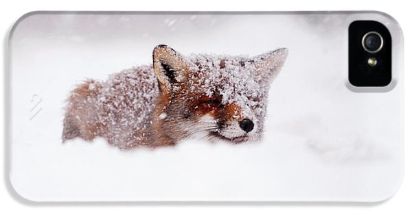 50 Shades Of White And A Touch Of Red IPhone 5 Case by Roeselien Raimond