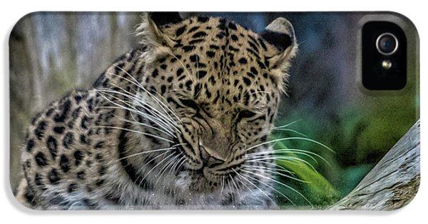 Amur Leopard IPhone 5 Case by Martin Newman