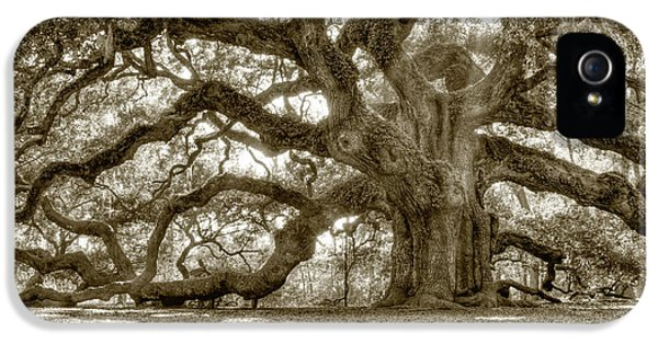Angel iPhone 5 Cases - Angel Oak Live Oak Tree iPhone 5 Case by Dustin K Ryan