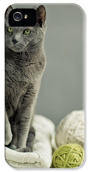 Russian Blue IPhone 5 Case by Nailia Schwarz