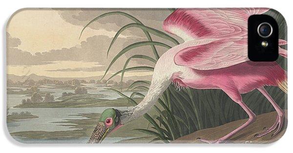 Roseate Spoonbill IPhone 5 Case by John James Audubon