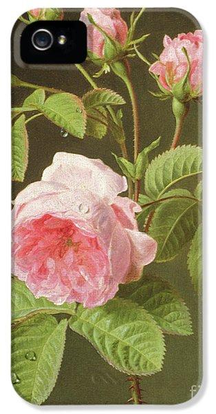 A Branch Of Roses IPhone 5 Case by Cornelis van Spaendonck