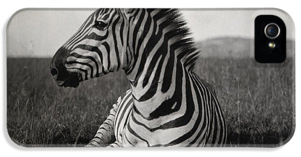 Zebra iPhone 5 Case - A Burchells Zebra At Rest by Carl E. Akeley