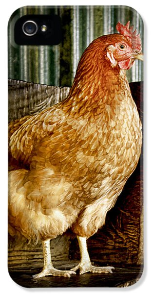 iPhone 5 Case - A Chicken Named Rembrandt by Holly Kempe