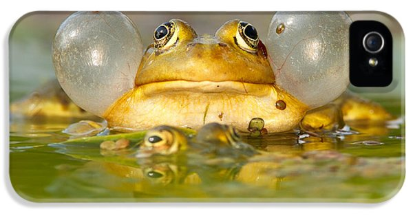 Amphibians iPhone 5 Case - A Frog's Life by Roeselien Raimond