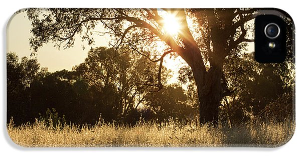 IPhone 5 Case featuring the photograph A Golden Afternoon by Linda Lees
