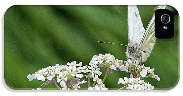 iPhone 5 Case - A Green-veined White (pieris Napi) by John Edwards