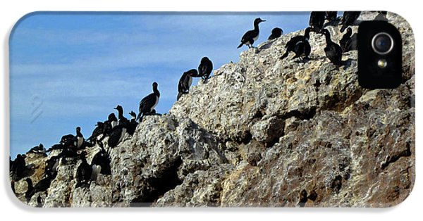 A Gulp Of Cormorants IPhone 5 Case
