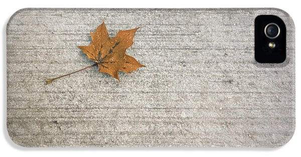 A Hint Of Autumn IPhone 5 Case by Scott Norris