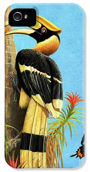 Hornbill iPhone 5 Case - A Hornbill by RB Davis